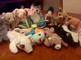 Photo Various Ty Beanie Babies